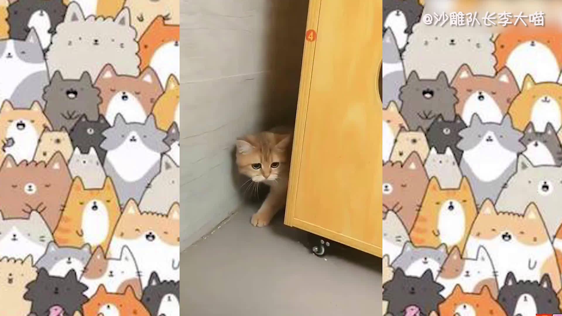 猫:哼没人跟我玩,我寄几玩 cr:西米加凉粉(谢谢受权)