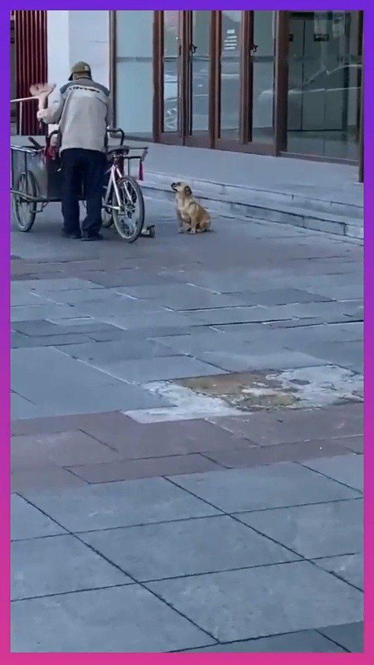 不愧是大爷养的狗子,街头拍到这一幕,不服不行