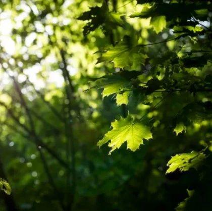【酱紫FM】梧桐树下共度美好时光