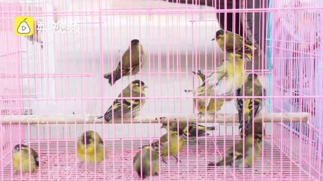 护送鸟儿到南方过冬!200余只野生鸟乘房车前往洞庭湖