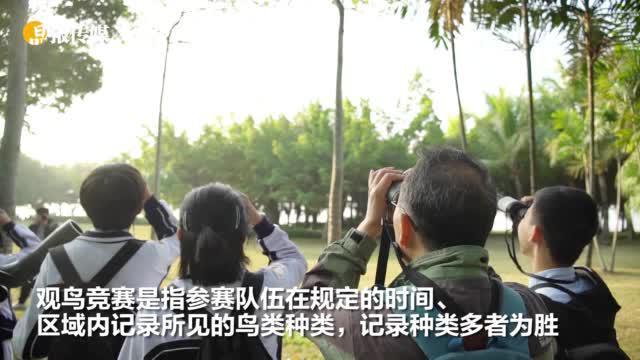 走进自然,识鸟寻踪深圳湾 45支青少年队伍参加观鸟竞赛