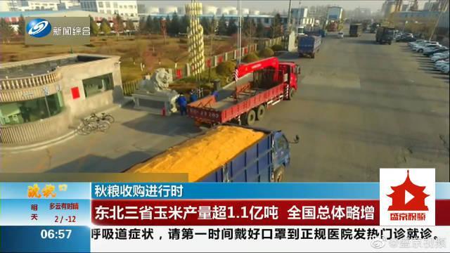 秋粮收购进行时 东北三省玉米产量超1.1亿吨 全国总体略增