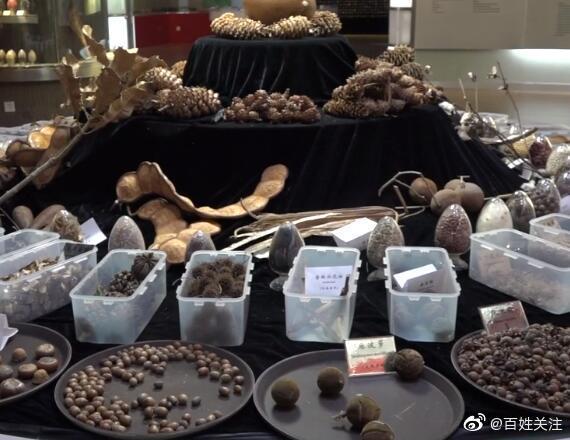 亚洲最大生物物种诺亚方舟保存上万种种子