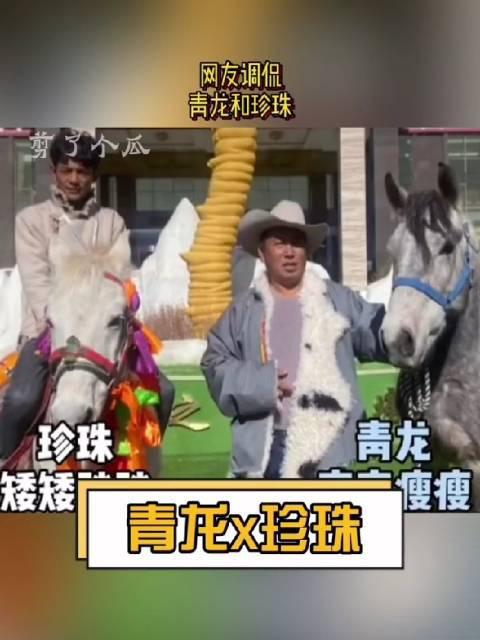 网友说丁真的两匹马青龙和珍珠,像极了江直树和袁湘琴 …………