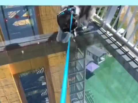 哈士奇挑战玻璃桥,怂的四肢发软