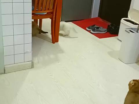 小母猫战战兢兢躲避大母猫,却意外掉到大母猫面前,哼,干就完了
