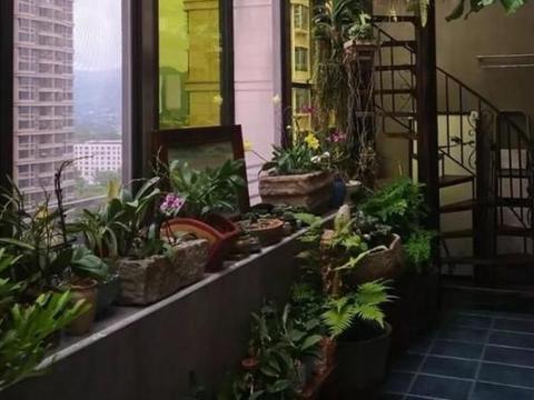 想要拥有小花园,就得跟着学种多肉,盆、碗、缸都能做花盆