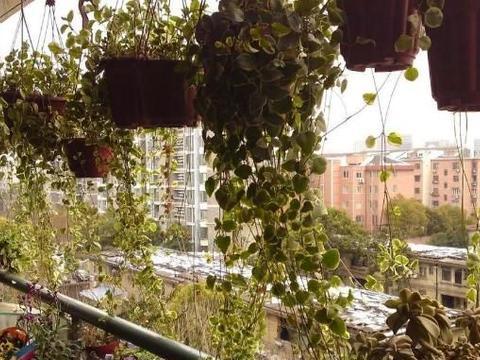 窗台、阳台太小,不够搁置盆栽咋办?4个方法,扩展出大空间
