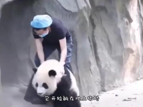 来自憨憨熊猫最后的倔强,我就不进去,谁还不是个宝宝了!