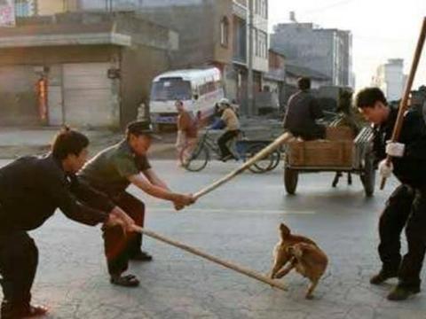 """当年,为了杜绝狂犬病,村里组织了""""打狗队"""""""
