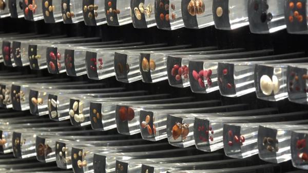 """亚洲最大生物物种""""诺亚方舟"""":保存上万种种子"""