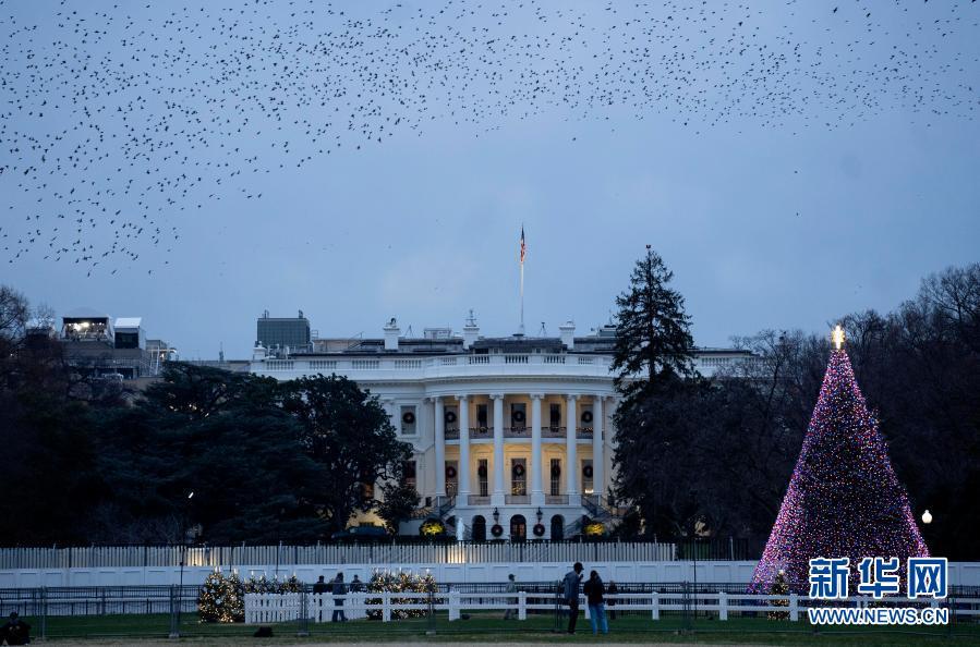 """华盛顿:疫情下国家圣诞树""""瘦身"""""""