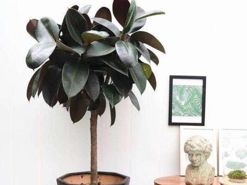 秋冬在家养花,就选此5种,盆栽装饰家居显档次,养护格外省心
