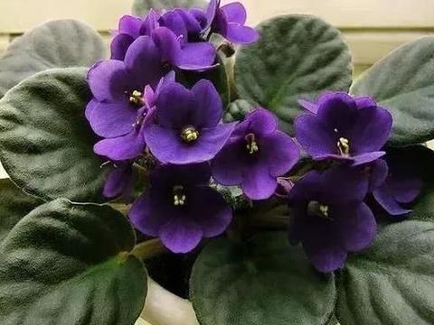 入冬养花草植物,不忽视4个关键点,方能远离黄叶、烂根、冻伤