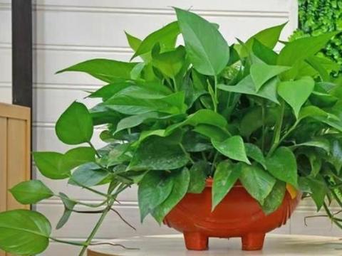 南方室内盆栽选什么花?首选4种植物,有了它们室内不再泛潮