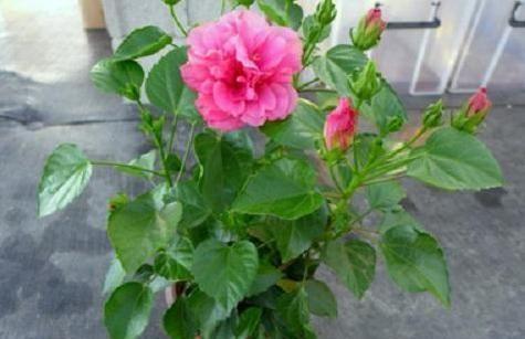 阳台养花草盆栽,秋冬该如何浇水?学会2招干湿判断技巧就够了