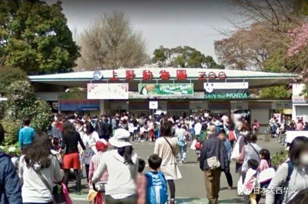 """东京上野动物园的大熊猫""""香香""""回国""""相亲"""",日本""""真爱粉""""们很伤心"""