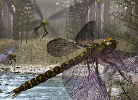 2.5亿年前,地球进入巨虫时代,蜻蜓长达1米,为何后来灭绝了