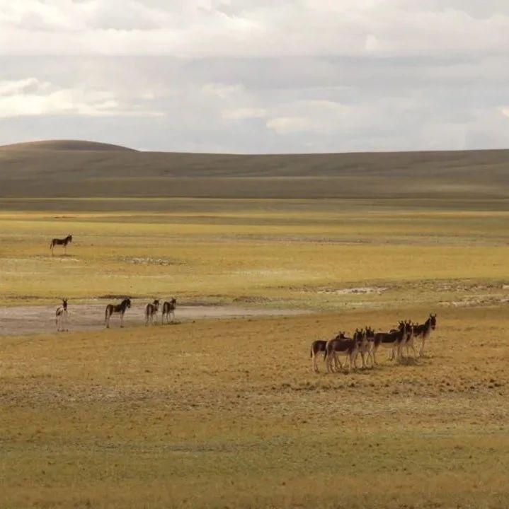 科学家首获青藏高原中南部地层年代序列