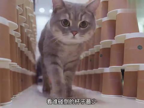 猫咪限宽门挑战,据说猫咪是水做的看看咱们家谁的含水量最高
