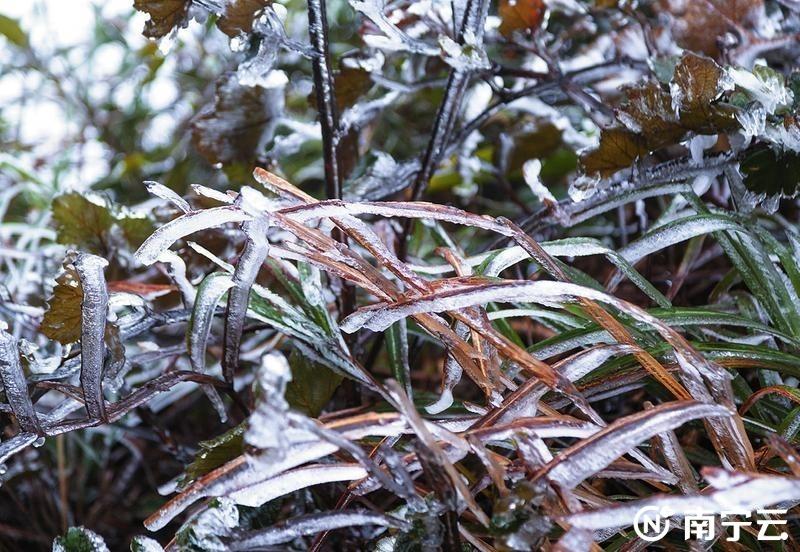 冰将草凝冻。