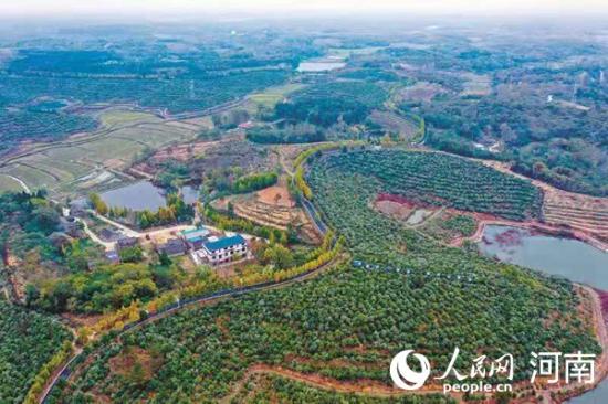 河南光山:油茶园里蹚出致富路