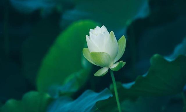 静守流年,以待花开,时光浓淡相宜,人心远近相安