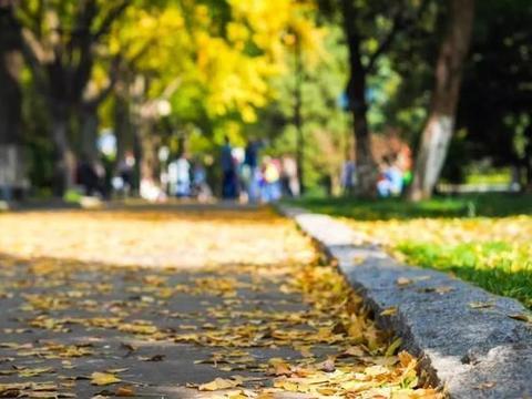 这里是国内最美的银杏大道,现在去真是赏景好时节!