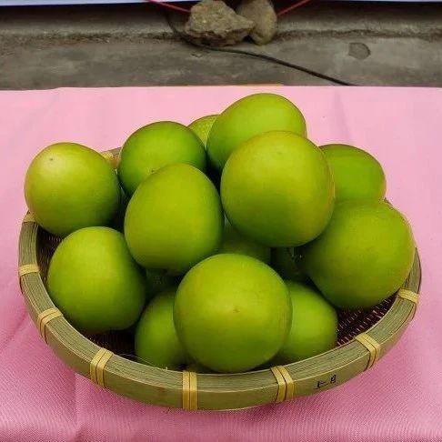 惠东梁化青枣节开启直播带货模式,助力惠东特色农产品远销全国