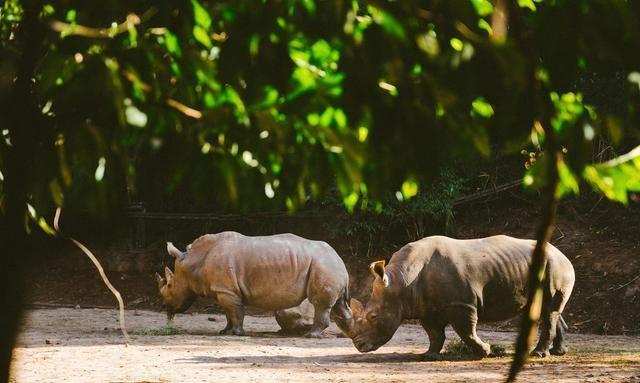 意外之喜,云南这个森林公园可以和野生动物零距离互动!