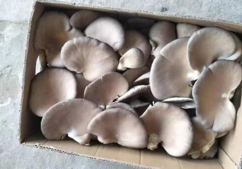 洗蘑菇光用水冲可不行,杂质和灰尘都没洗干净,用它洗,才彻底