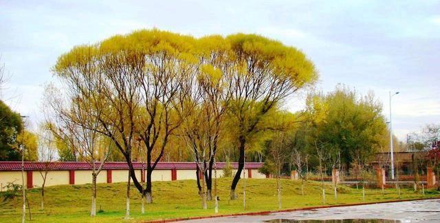 石河子大学科技学院转设,西域水城五家渠市迎来新疆政法学院