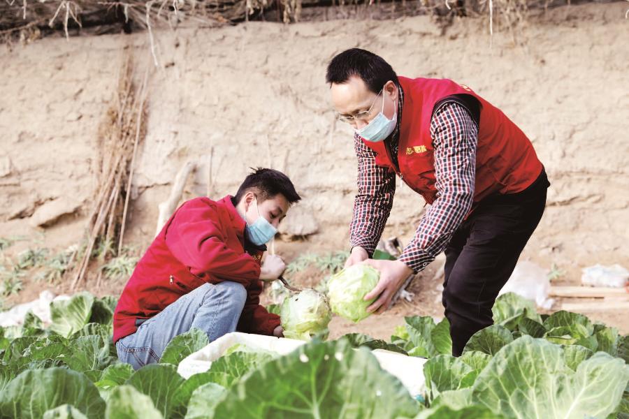且末县:工作队队员帮菜农采收蔬菜