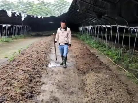 大叔养了5000斤蚯蚓,铺下2吨牛粪一下就吃完了,这些蚯蚓真能吃