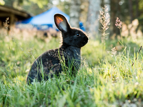 """生肖兔:就在明天要经历1个大""""坎"""",属兔人看看怎么回事?"""
