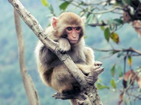 属猴人过了52岁后指望谁?尤其是1968年的,我劝你好好看看!