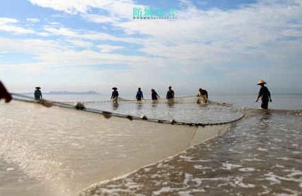 金滩京族拉大网捕鱼