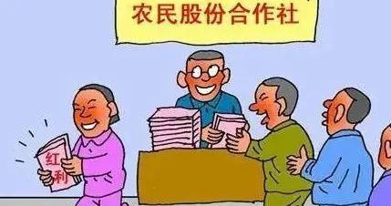 按照订单种植水稻今年盈利61.25万元吉林市昌邑区 弘顺合作社又分红