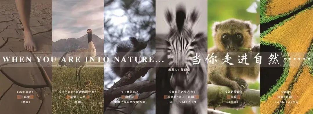 "【COP15】视觉盛宴! ""表情包旱獭""亮相昆明这场摄影展图片"