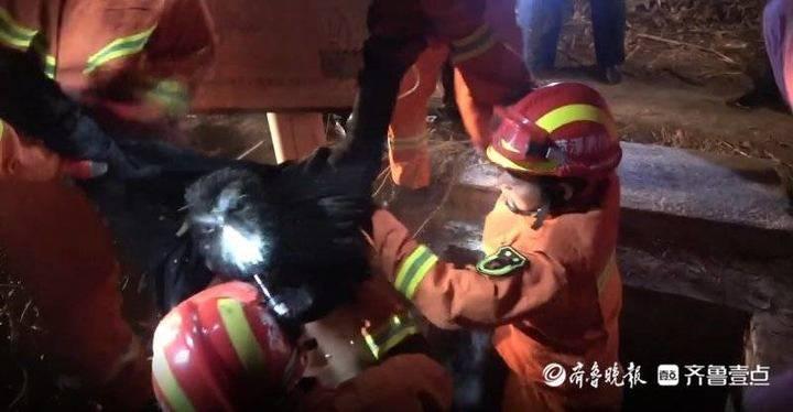 菏泽巨野:年轻小伙因家庭矛盾跳井,消防紧急救援