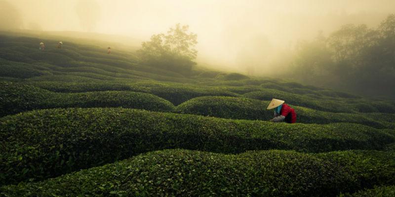 """""""他们都在研究喜茶"""",中国茶全球化的机会在哪?"""