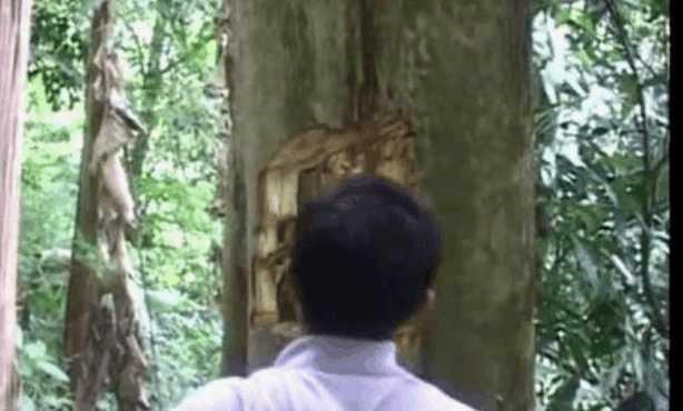 农村男子听见树中有异响,劈开大树后,里面的宝贝可真是不少