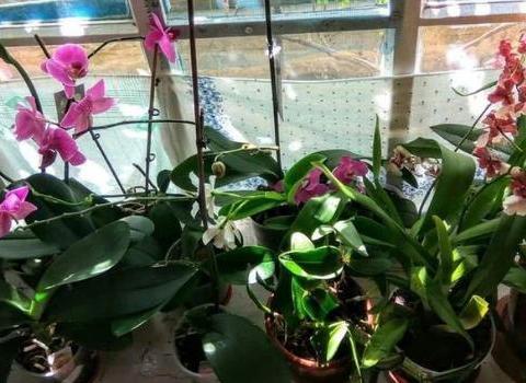 万能养花介质,蚯蚓粪,实用不烧苗,盆栽啥花都能根粗叶壮