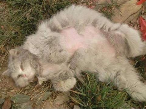 打狂犬疫苗的尴尬体验:被猫咬伤,打针居然需要脱衣服,还打手指