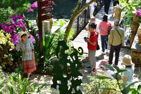 三亚暖冬引大批游客避寒游 热带天堂景区游客量攀升