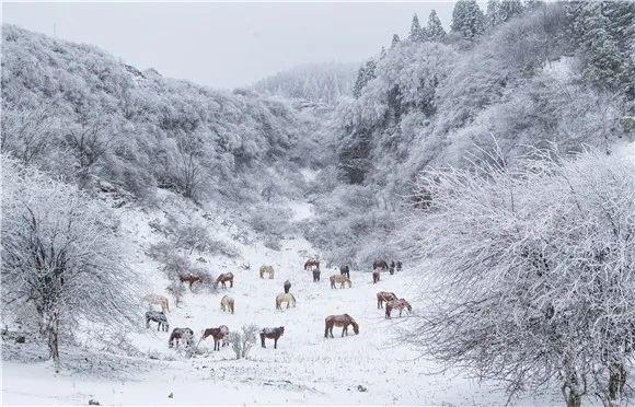 仙女山雪景 仙女山景区供图