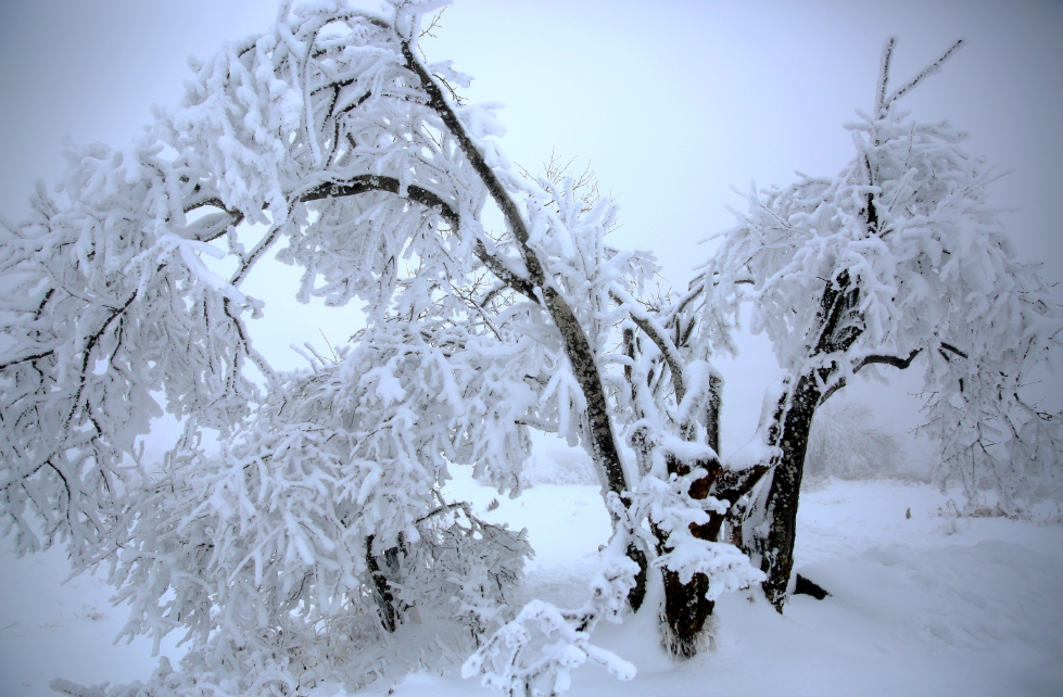 雪后的红池坝 重庆巫溪供图