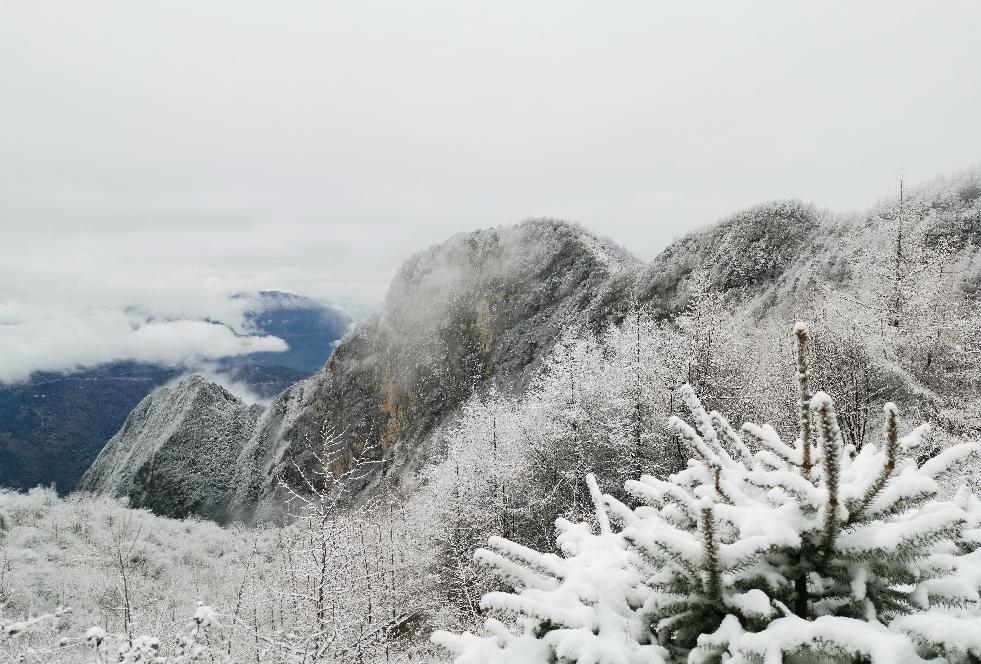 巫山。高海拔山顶上白雪皑皑 向勇 摄