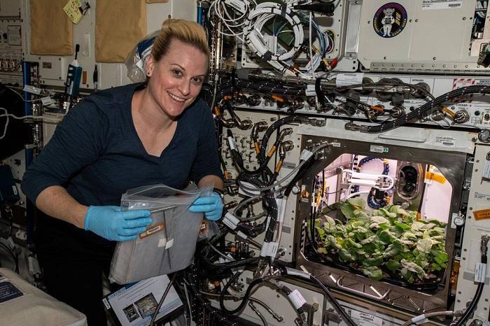 """真实版《火星救援》?NASA收获史上首批""""太空萝卜"""""""