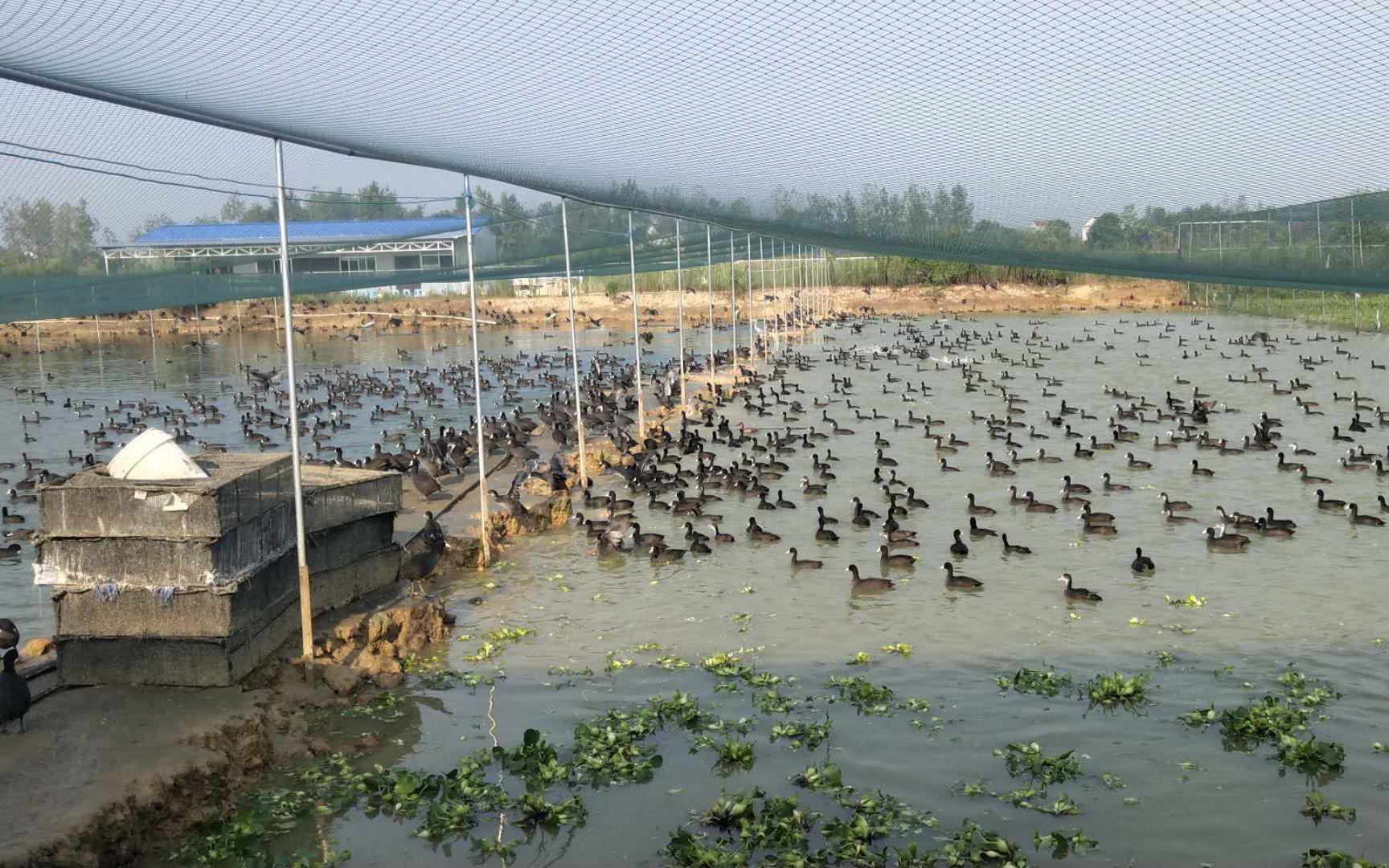 人工繁育野生动物之争:禁不禁、禁哪些、怎么禁图片